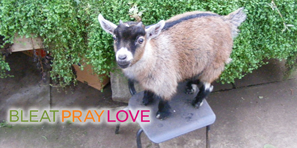 How long do goats live?