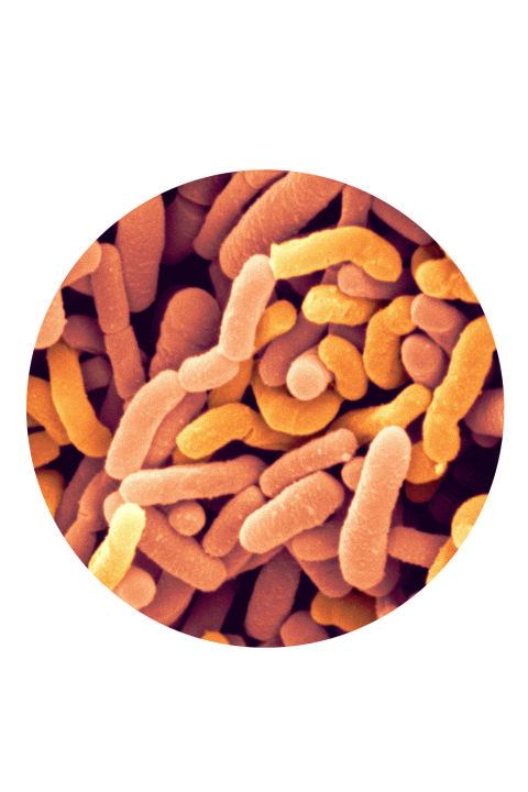 """The majority of our immune system lives in our gut. During cold and flu season, it's easy for environmental toxins to enter our bodies and throw off the delicate balance of friendly and unfriendly bacteria in our digestive tracts, causing us to fall ill. When you take a probiotic, it helps to rebuild the good and healthy bacteria in your gut, restoring this balance and priming your immune system. A healthy balance will help you get better quicker and help protect you from future colds and flu. I recommend taking a probiotic with a prebiotic, which is the food that nourishes probiotics, to keep colonies of good bacteria thriving.""—Susan Sloane, Registered Pharmacist (RPh), Nutrition & Gut Health Specialist, Family Flora"