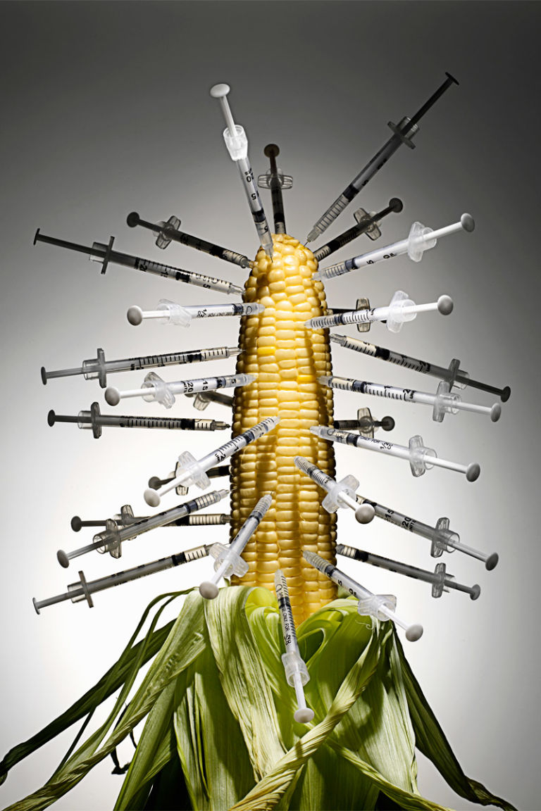 the bad seed the health risks of genetically modified corn