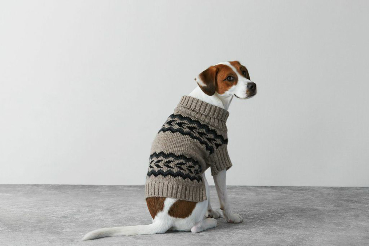 American Eagle Outfitters Jackets & Coats   American Eagle ...  Dog Jacket American Eagle Outfitters