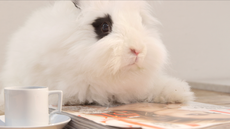 bunny reading ELLE